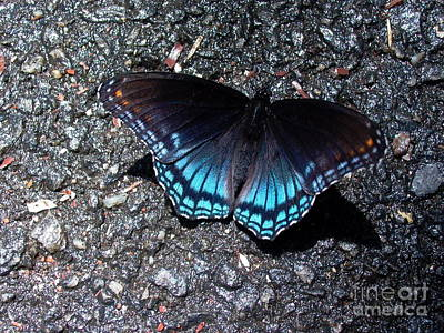 Butterfly And Asphalt Art Print