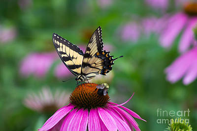 Photograph - Butterfly And Bee by Deb Kline