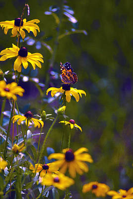 Butterfly On Black Eyed Susans Art Print by ARTography by Pamela Smale Williams