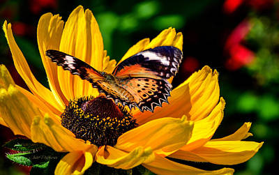 Butterfly And Bloom Art Print by Julie Palencia