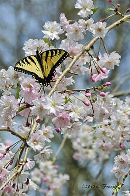 Butterfly And Blooms Art Print by Kenny Francis