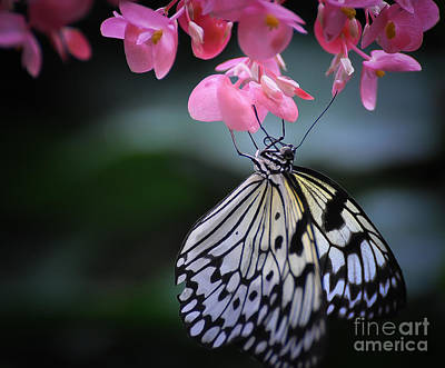 Photograph - Butterfly And Blossoms by Bianca Nadeau