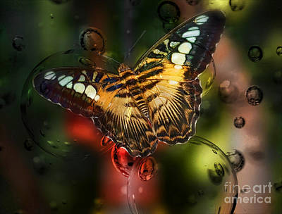 Opaque White Mixed Media - Butterfly And Bubbles  by Elaine Manley
