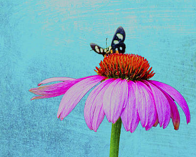 Butterfly And Coneflower On Turquoise Art Print by Dan Holland
