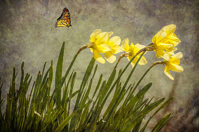 Butterfly And Daffodils Art Print