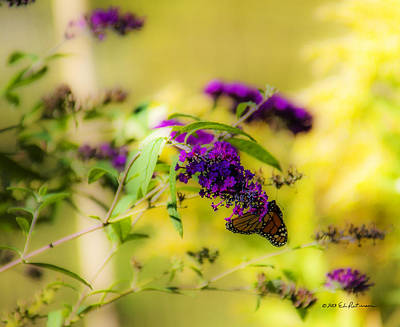 Photograph - Butterfly And Flower by Edward Peterson