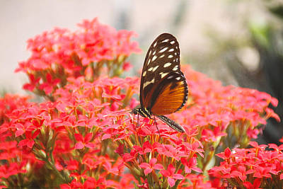 Photograph - Butterfly And Flowers by Peggy Collins