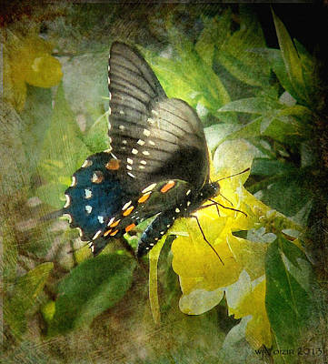 Butterfly And Jasmine Art Print by Bill Voizin