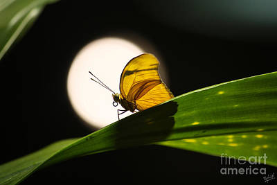 Butter Fly Photograph - Butterfly And The Moon by Nishanth Gopinathan