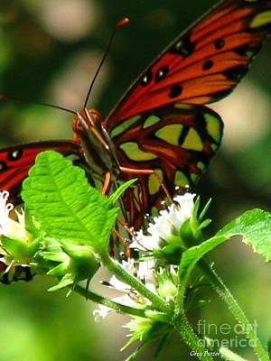 Butterfly Art Art Print by Greg Patzer
