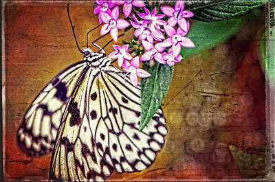 Mixed-media Photograph - Butterfly Art - Hanging On - By Sharon Cummings by Sharon Cummings