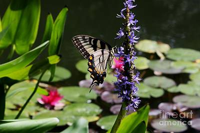 Butterfly At Lunch Art Print by Marilyn Carlyle Greiner
