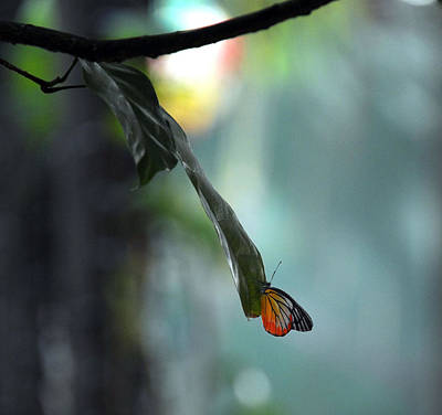 Wall Art - Photograph - Butterfly At Rest by Mark Sullivan