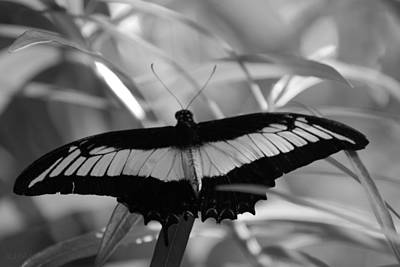 Photograph - Butterfly Bat by Rob Hans