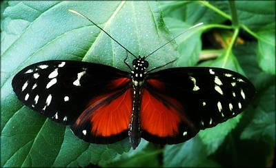 Butterfly Beauty Art Print by Beril Sirmacek