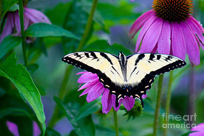 Photograph - Butterfly Beauty by Deb Kline