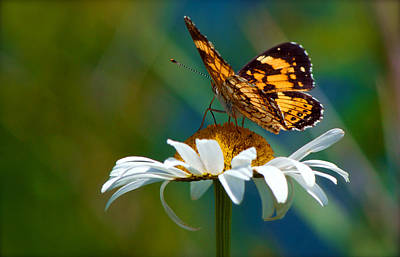 Photograph - Butterfly Beauty by Linda Shannon Morgan