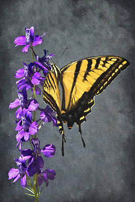Fushia Photograph - Butterfly Beauty by Priscilla Burgers