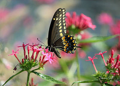 Blue Swallowtail Photograph - Butterfly Beauty by Suzanne Gaff