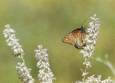 Photograph - Butterfly Before Bee by Fraida Gutovich