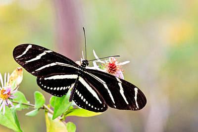 Photograph - Butterfly by Ben Graham