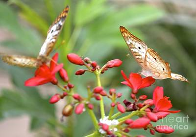 Photograph - Butterfly Besties by Carla Carson