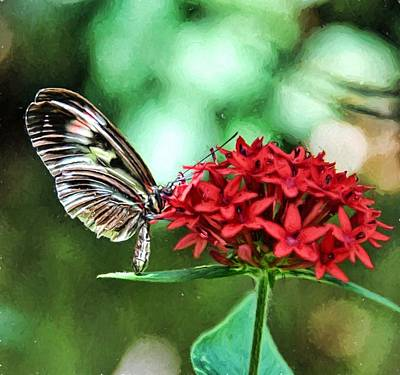 Art Print featuring the photograph Butterfly by Bill Howard