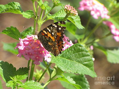 Butterfly Bloom Art Print by Gayle Melges