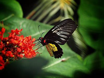 Butterlfy Photograph - Butterfly Breakfast by Linda Morland