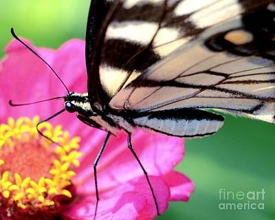Butterfly Brunch Art Print by Chad and Stacey Hall