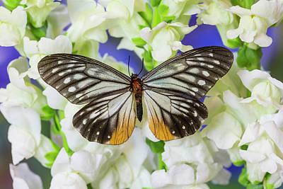 Butterfly Calinaga Buddha, The Freak Art Print by Darrell Gulin