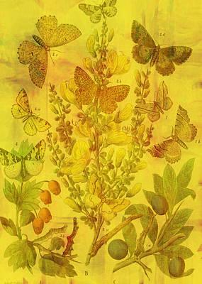 Acorn Digital Art - Butterfly Cascade by Sarah Vernon