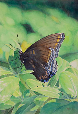 Free Painting - Butterfly by Christopher Reid