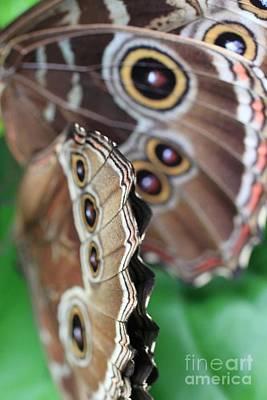 Butterfly Close Up  Art Print by AR Annahita
