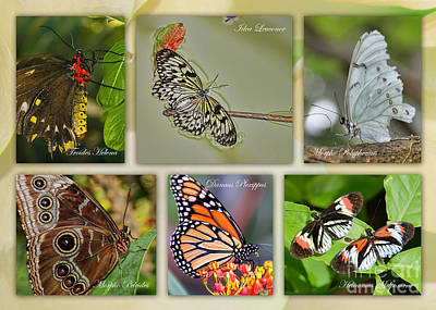 Photograph - Butterfly Collage by Olga Hamilton