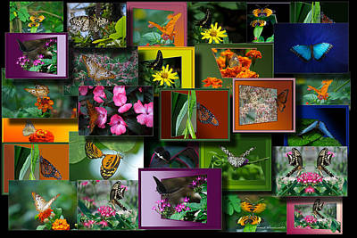 Butterfly Collage Rectangle Art Print by Thomas Woolworth