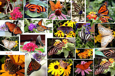 Print featuring the photograph Butterfly Collage by Steven Spak