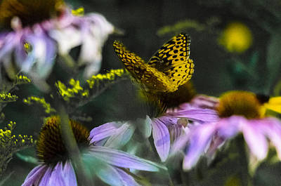 Sports Royalty-Free and Rights-Managed Images - Butterfly Coneflowers 2 by David Tennis