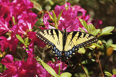 Art Print featuring the photograph Butterfly by Debra Crank