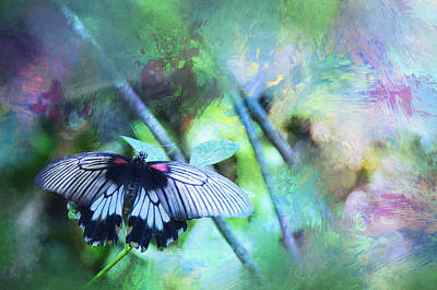 Photograph - Butterfly Dreams by Carla Parris