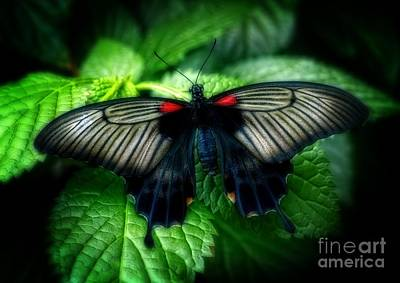Butterfly Dreams Art Print by Inspired Nature Photography Fine Art Photography