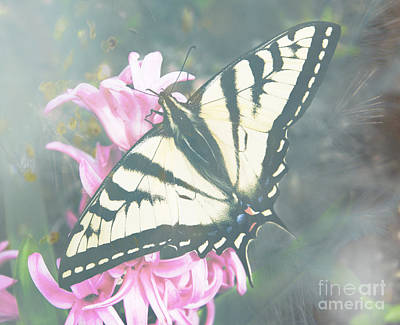 Tiger Swallowtail Photograph - Butterfly Dreams by Jim and Emily Bush