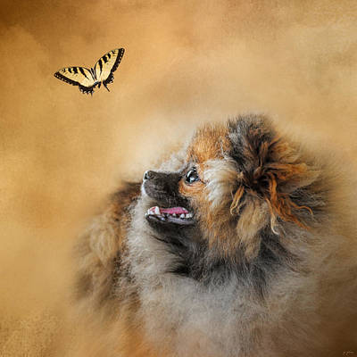 Photograph - Butterfly Dreams - Pomeranian by Jai Johnson