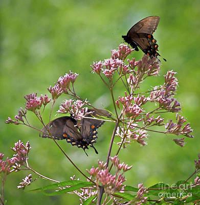 Butterfly Duet  Art Print by Kerri Farley
