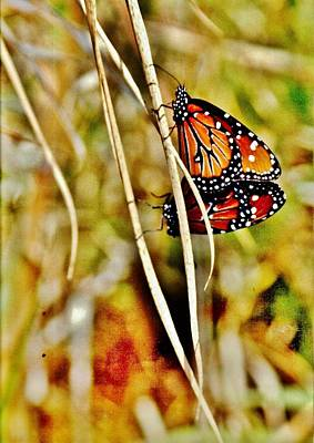 Photograph - Butterfly Duo by VLee Watson