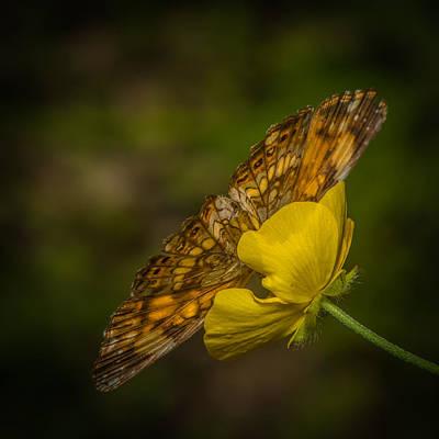 Butterflys Photograph - Butterfly Fan by Paul Freidlund