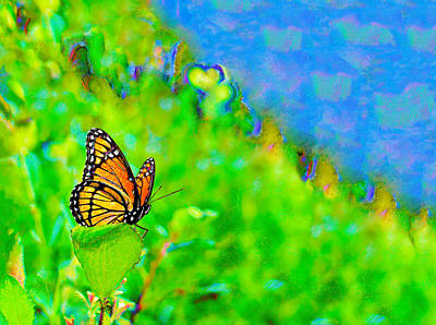 Photograph - Butterfly Fantasy by Marianne Campolongo