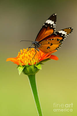 Exoticism Photograph - Butterfly Feeding by Tosporn Preede