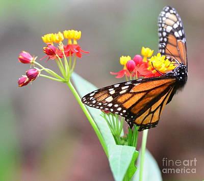 Butterfly Flower - Gossamer Wings Embrace Candy Blossoms Art Print by Wayne Nielsen