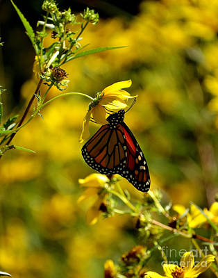 Photograph - Butterfly Flower by Scott B Bennett